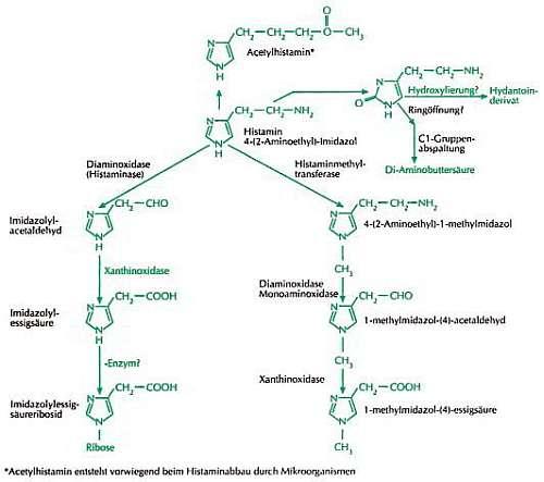 hit  u0026gt  histaminose  u0026gt  histaminstoffwechsel